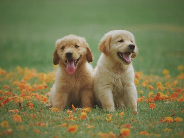 Two puppies sitting outdoors.