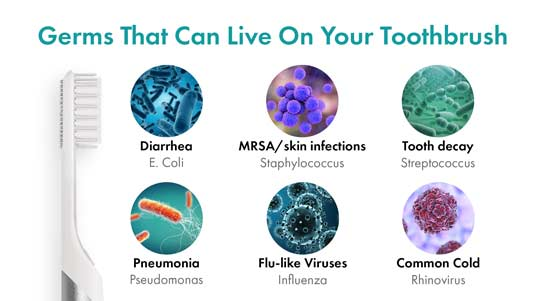 Toothbrushes collect a large amount of bacteria over their use.